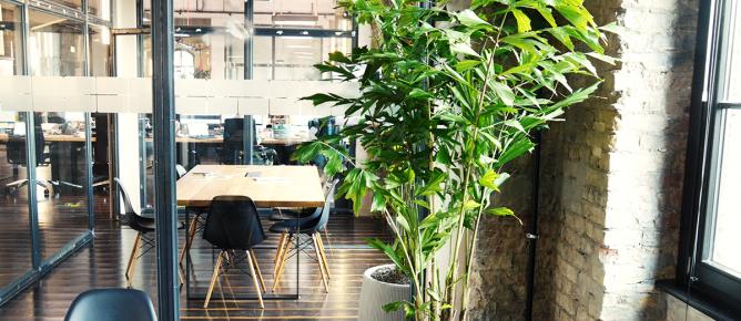 Pflanzendesign für Konferenzräume