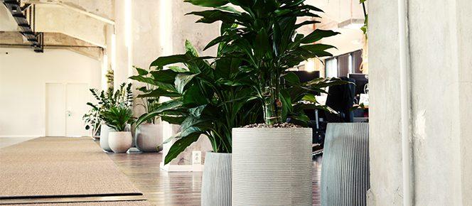 Raumgestaltung im Loft mit Pflanzen