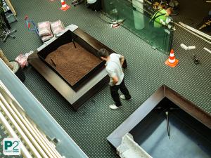 Räume gestalten mit Pflanzen