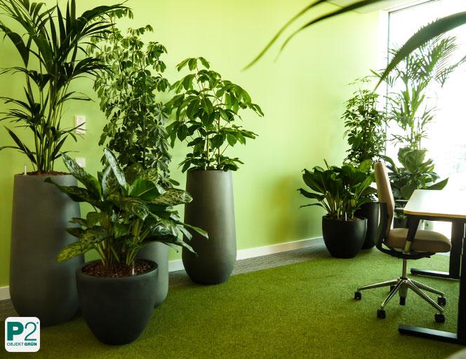 Grüner Arbeitsplatz, individuelle Arbeitsplatzgestaltung mit Pflanzen, Pflanzen im Büro