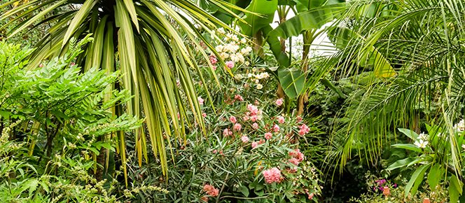 Überwinterung von Kübelpflanzen, Winterservice Pflanzen Berlin