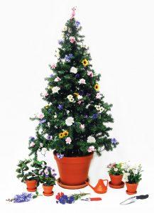 Weihnachtsbaum Service.Kontaktieren Sie Uns Zum Thema Weihnachtsbaum Service P2 Objekt Grün