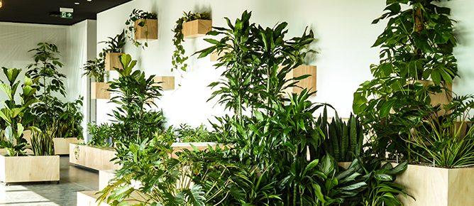 Urban Farming Pflanzendesign für Unternehmen