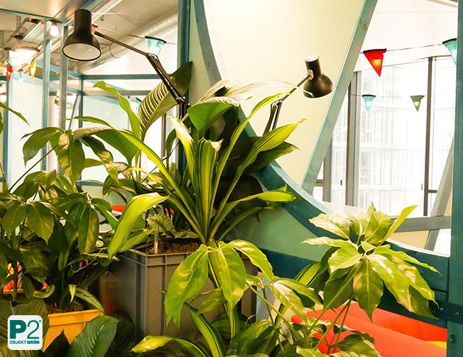 Moderne Arbeitswelten brauchen Pflanzen