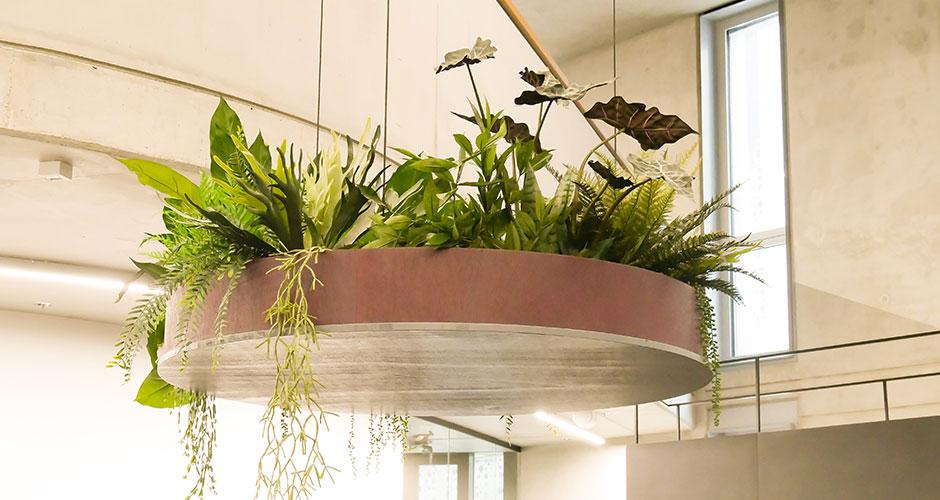 Hängepflanze Atrium