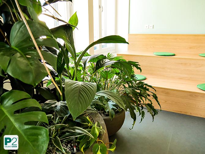P2 Referenzen: Begrünung Pflanzendesign Drei Bereich