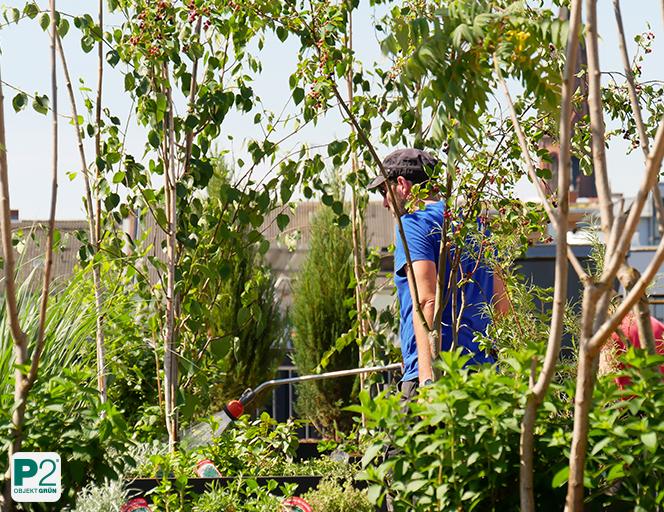 Bewässerung Terrasse