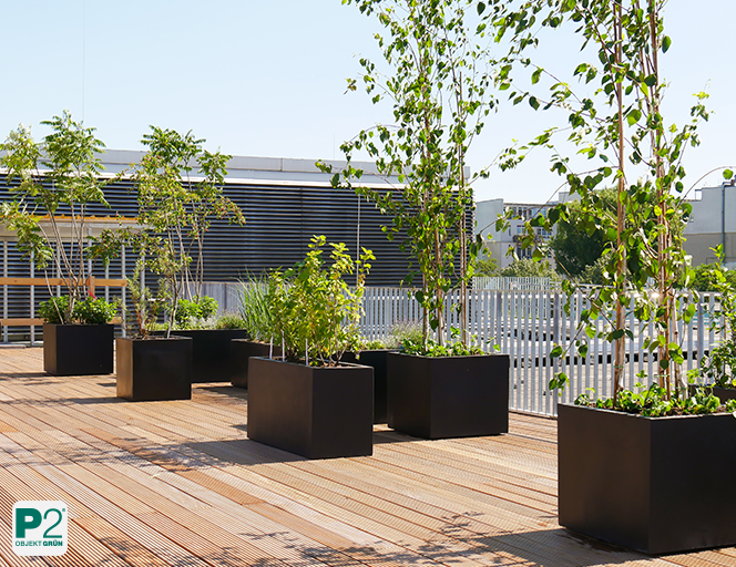 Terrassen mit Kräutern und Beerenobst