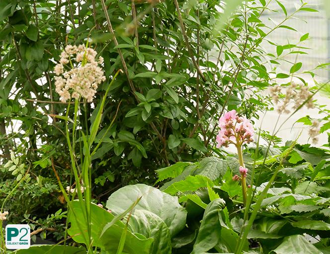 Schattenpflanzen für die Terrasse
