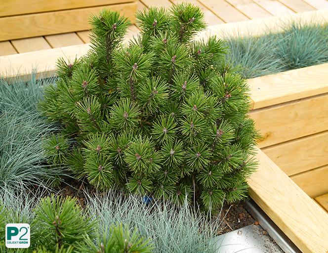 Pflanzen für Sonnenterrasse