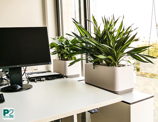Schlechte Luft? Mit diesen Pflanzen und Gefäßen können Sie die Luftqualität verbessern.