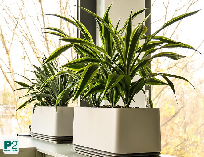 Luftqualität im Büro verbessern - testen Sie jetzt kostenfrei das AIRY-System