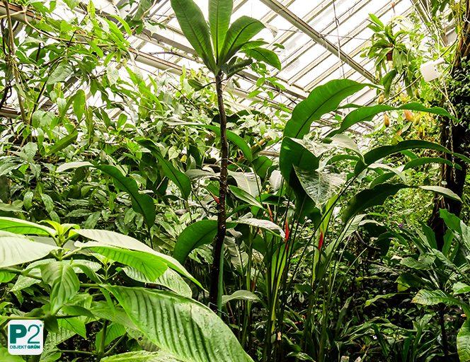 Beziehung Pflanze - Mensch: Wenn die Pflanze andersartig ist, dann sind wir es auch.