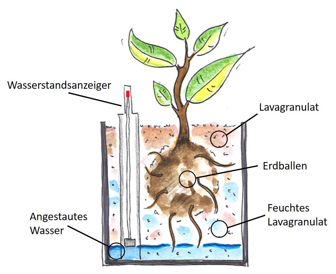 Semi-Hydrokultur