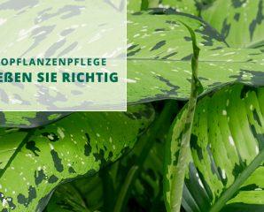 Hydropflanzenpflege - So gießen Sie richtig.