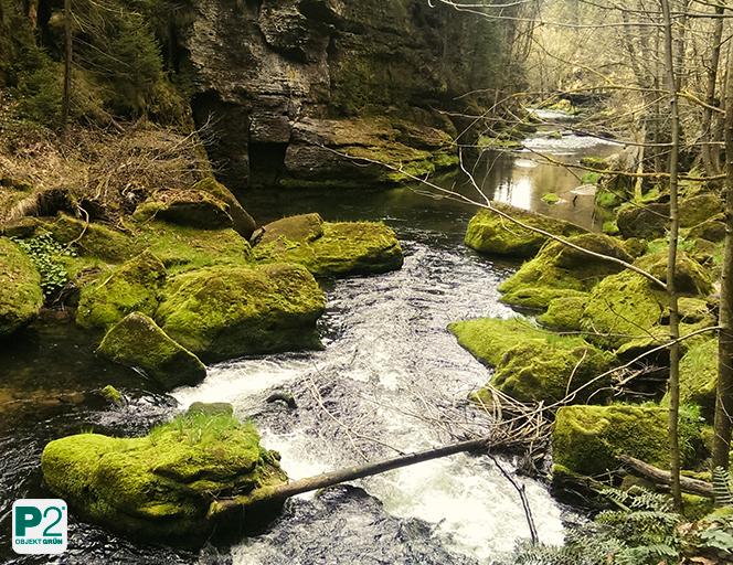 Besondere Kraft: das Grün der Pflanzen an Wasserquellen