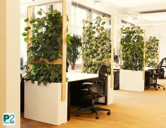 Raumteiler Pflanzen in einem Großraumbüro