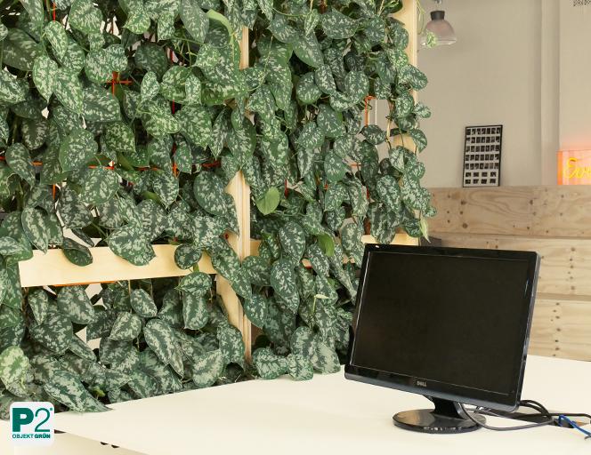 Raumteiler Pflanzen als Corona Schutzmaßnahme