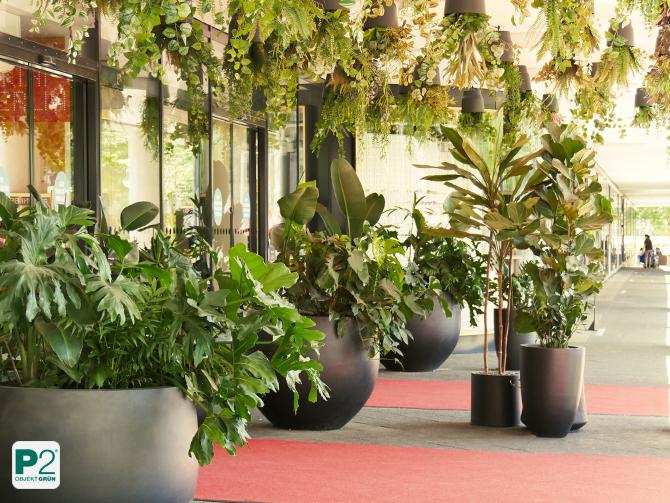 Kunstpflanzen & Zimmerpflanzen im Eingangsbereich