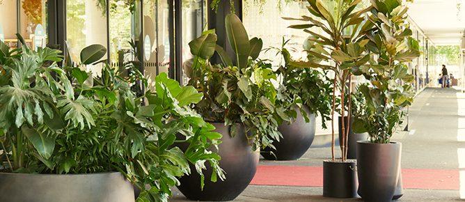 Bikini Berlin: Urban Jungle - Zimmerpflanzen und Kunstpflanzen für den Outdoor-Bereich