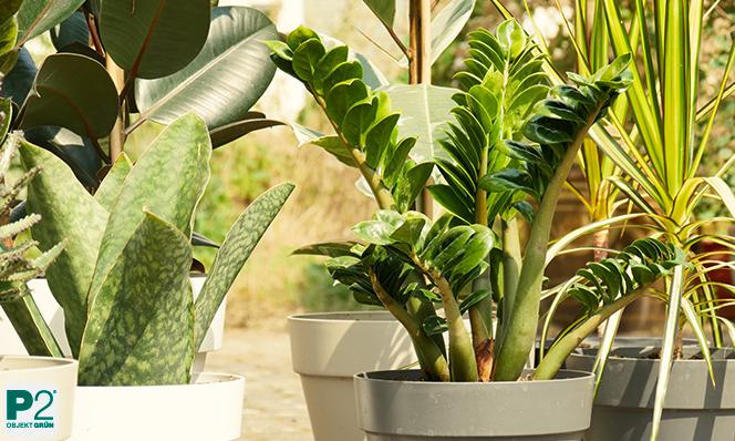 Zimmerpflanzen draußen - was ist zu beachten?