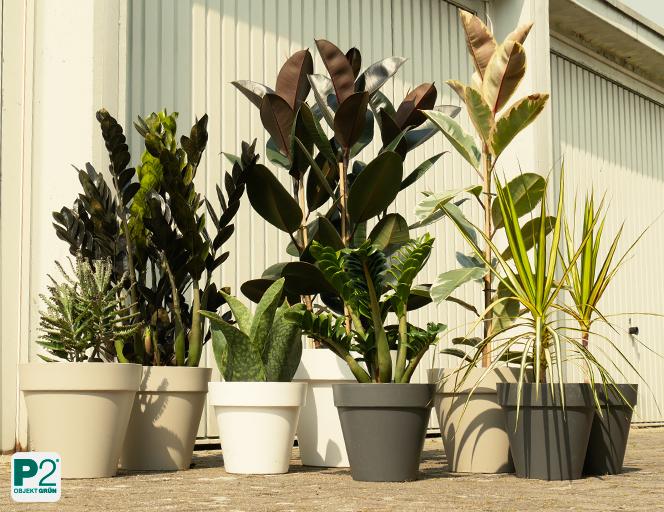 Zimmerpflanzen draußen in einer Gruppe
