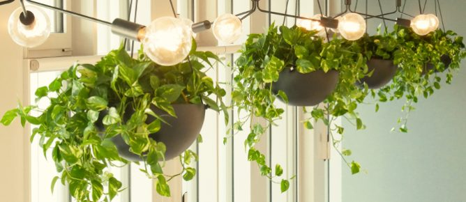 Pflanzendesign im Bürogebäude MY.B