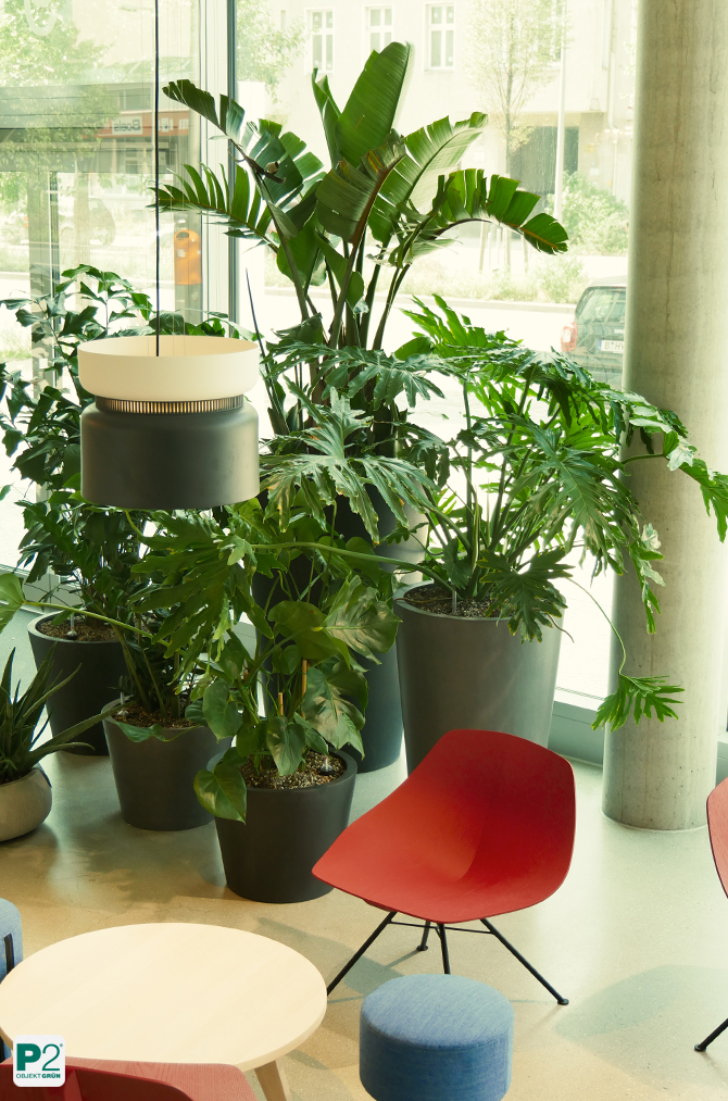 Pflanzendesign zur Abtrennung von Raumbereichen