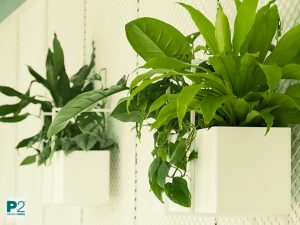 gute Lichtbedingungen für Pflanzendesign mit lebendigen Pflanzen