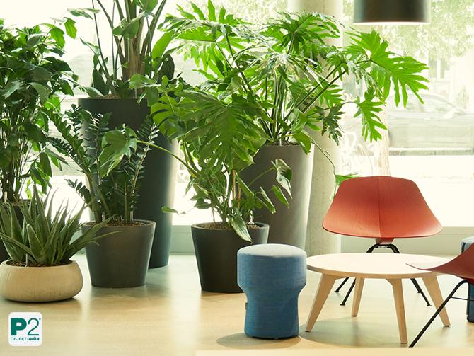 Sitzecke im Lobbybereich mit Pflanzen