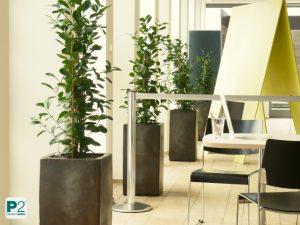 Reihung der Pflanzen orientiert sich an Reihung der Fenster