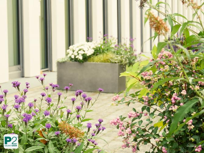 Terrasse mit insektenfreundlichen Pflanzen