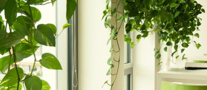 Pflanzendesign orientiert sich Architektur