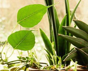 Was braucht meine Topfpflanze?