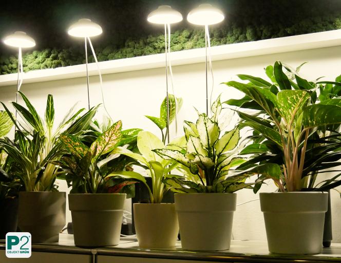 Das Licht und die Topfpflanze