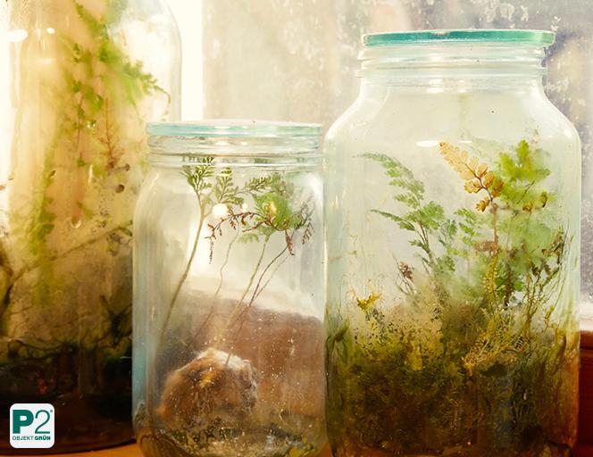 Wichtig ist die Wurzelatmung der Topfpflanze.