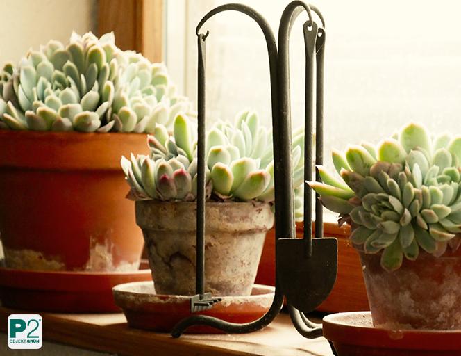 Ein ausgewogener Volldünger für Topfpflanzen ist in den meisten Fällen ausreichend.