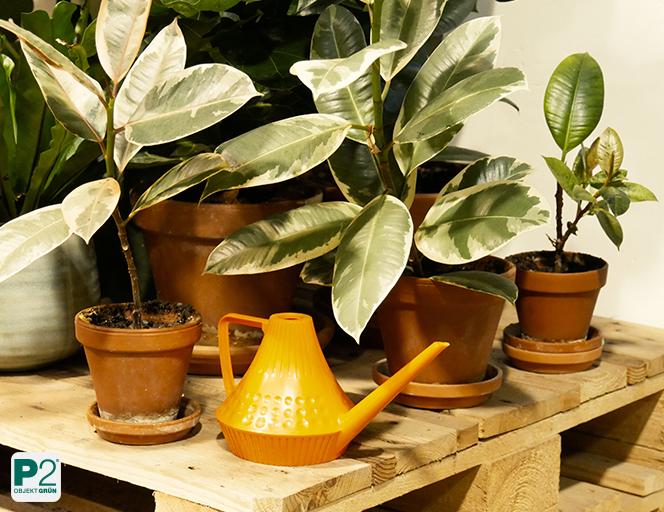 Regenwasser ist das ideale Wasser auch für Topfpflanzen