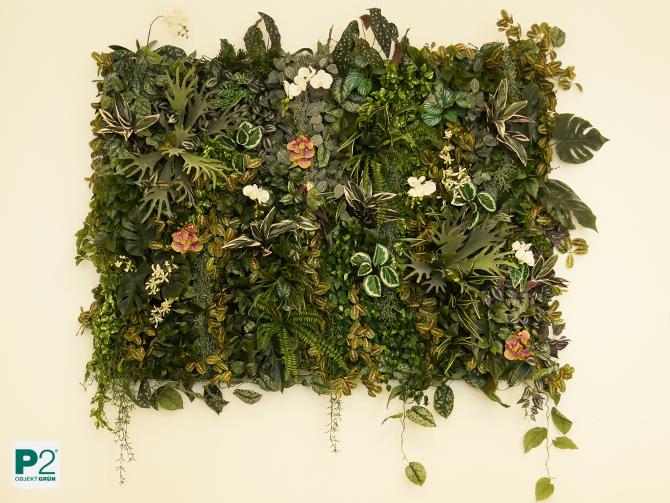 Pflanzenbild ohne Pflegeaufwand