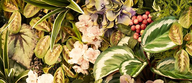 Ein Kunstwerk: Pflanzenbilder aus Kunstpflanzen
