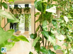 Pflanzenvorhang Shoppingroom