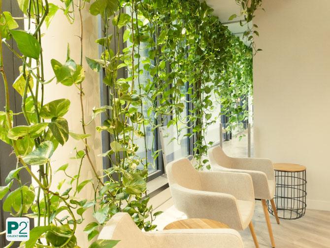 Pflanzenvorhang