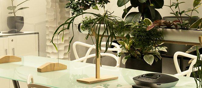 Warum wir Pflanzen im Büro brauchen