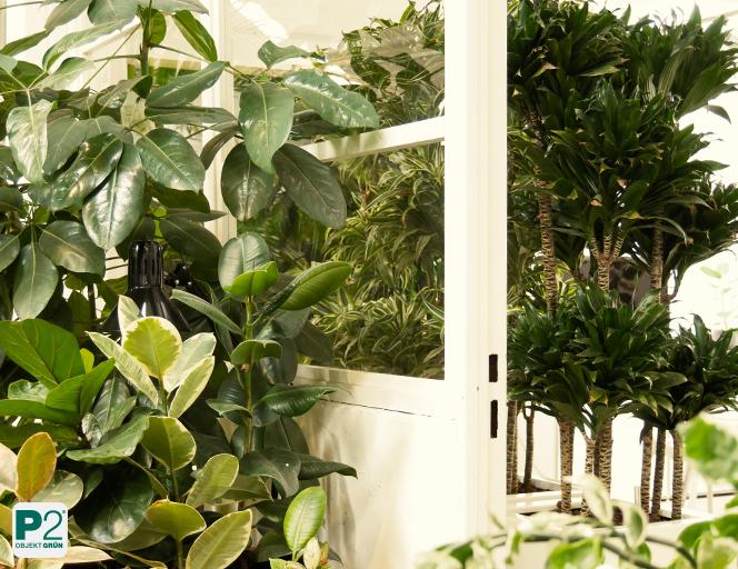 Was können wir von Pflanzen lernen?
