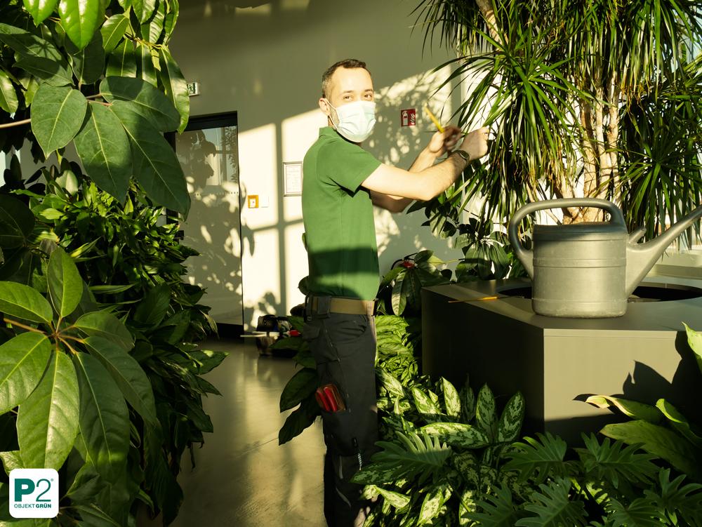 Pflanzenpflege Service Berlin