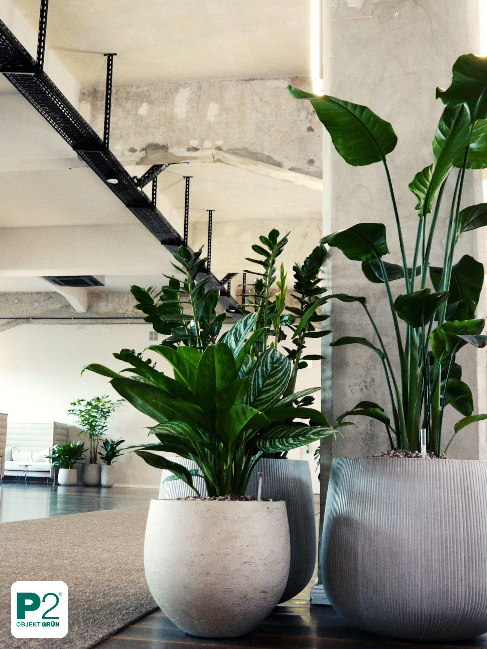 Pflanzen mieten
