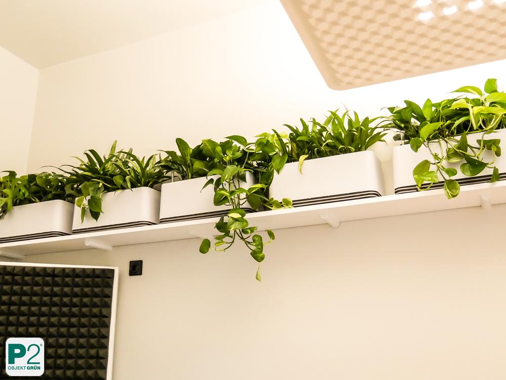 AIRY Biofilter im Einsatz – Luftverbesserung im Büro