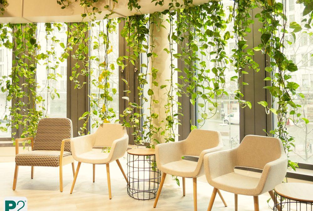 Pflanzenvorhang – C&A am Kurfürstendamm