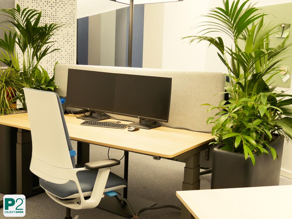 Begrünungsideen Büroräume