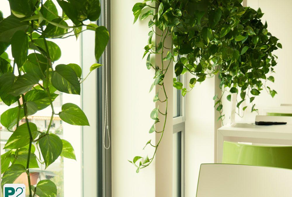 Pflanzendesign orientiert an Architektur – ProPotsdam